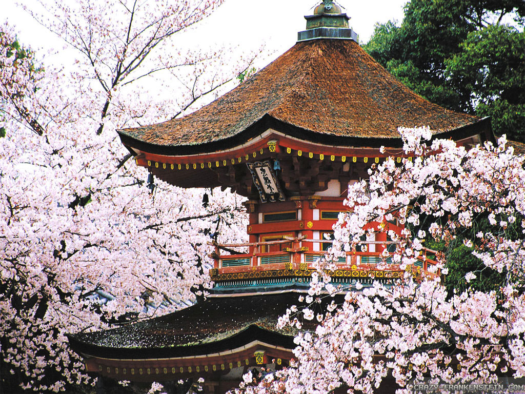 1_kyoto-cherry-blossoms