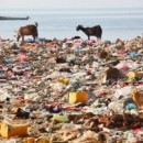 How Environmental Degradation Contributes To Humanity's Depression